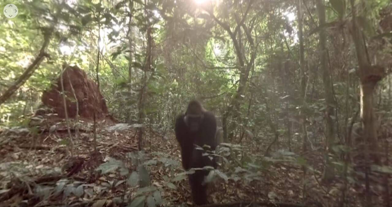 gorilla vr